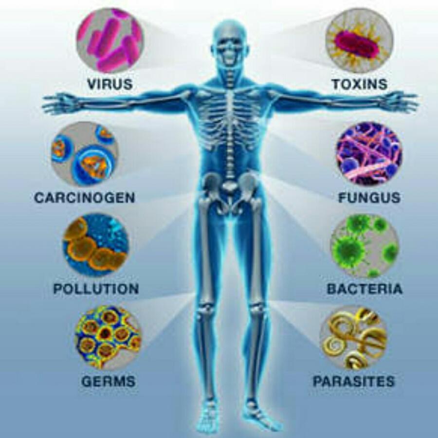 """alt=""""Como funciona o sistema imunológico?"""""""