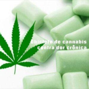 """alt=""""Chiclete de cannabis contra dor crônica"""""""